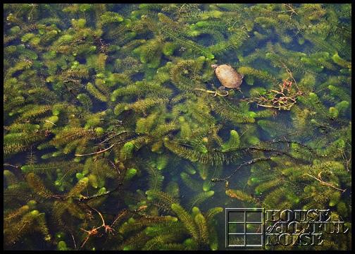 5_turtle