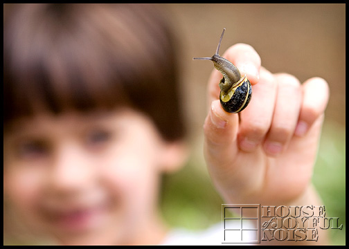 snails_2