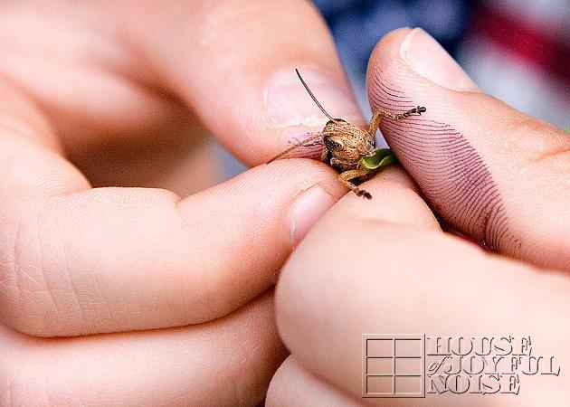 grasshopper_cu