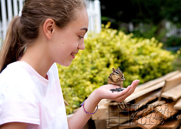 hand-taming-chipmunks-2