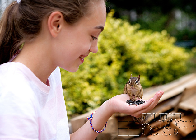 hand-taming-chipmunks-3