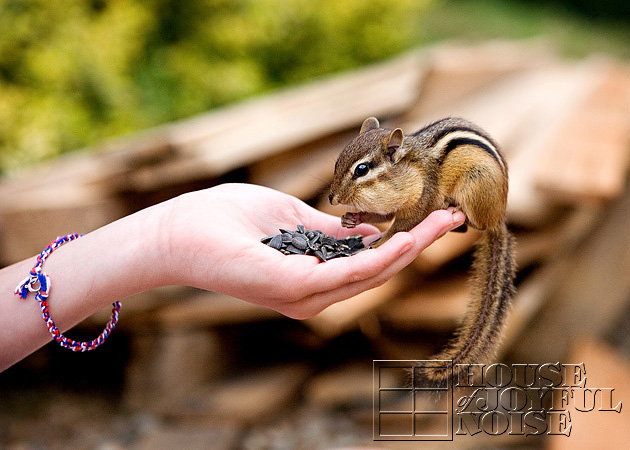 hand-taming-chipmunks-4