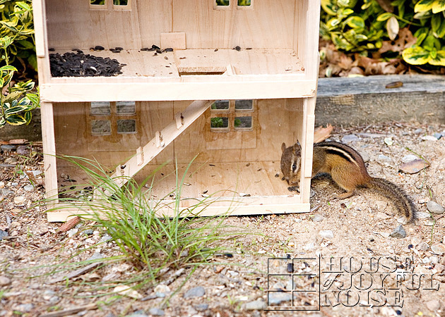 homemade-chipmunk-feeding-house-1