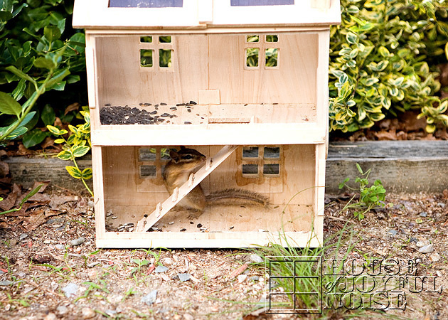 homemade-chipmunk-feeding-house-2