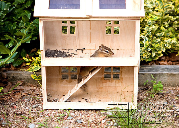 homemade-chipmunk-feeding-house-3