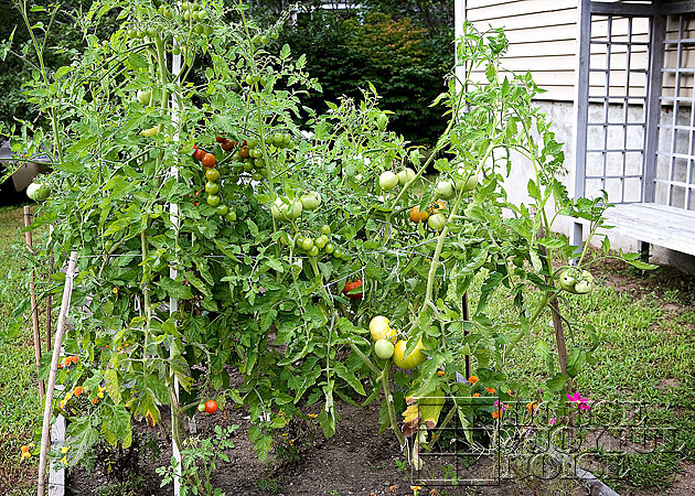 vegetable garden photos