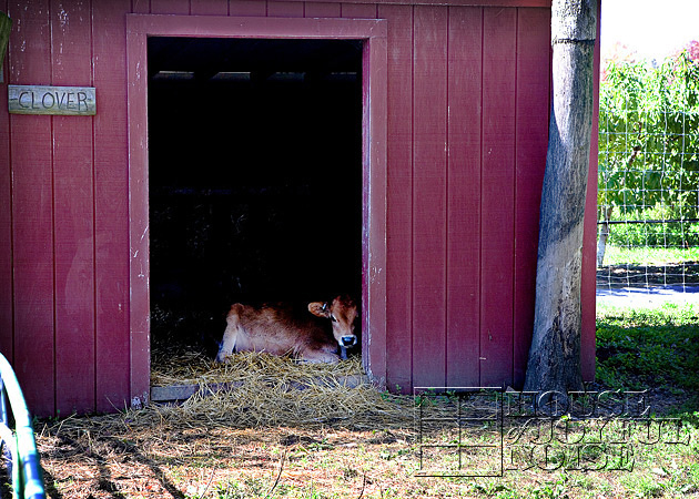 lookout-farm-natick-ma-8