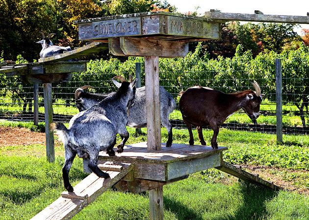 lookout-farm-natick-ma-9