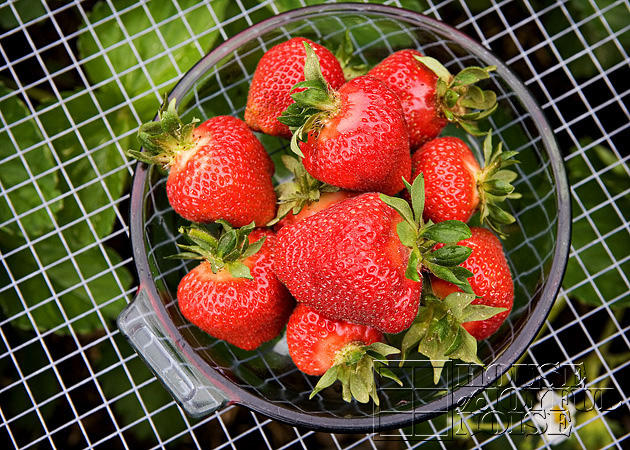 04_picked-strawberries