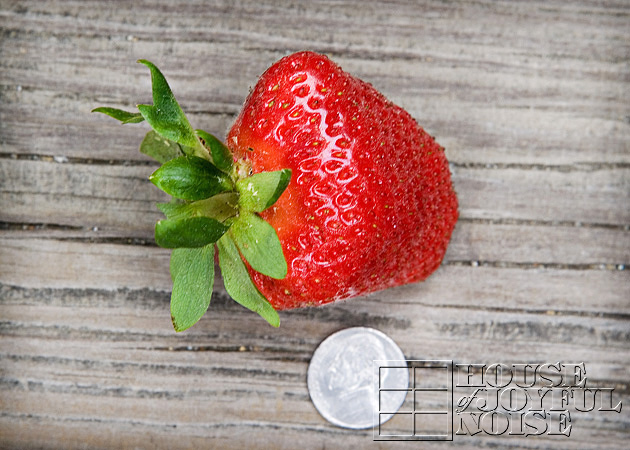 06_huge-strawberry