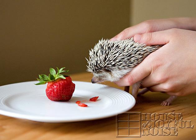 12_hedgehog_strawberry