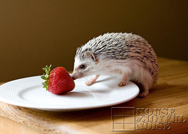 13_hedgehog_strawberry