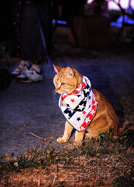 13_patriotic-cat-plymouth-ma