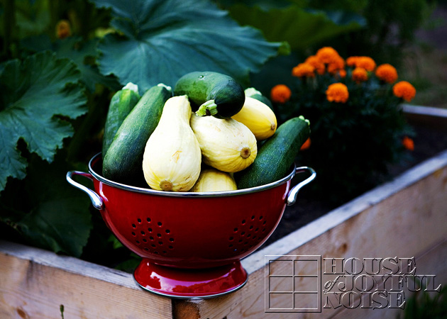 19_fresh-picked-squash