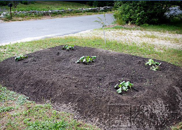 making-growing-pumpkin-patch-progress-results-8