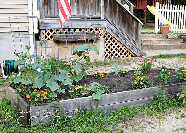 early-flower-vegetable-garden-photos-1
