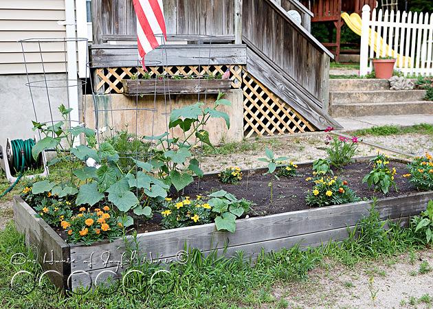 early-flower-vegetable-garden-photos-1