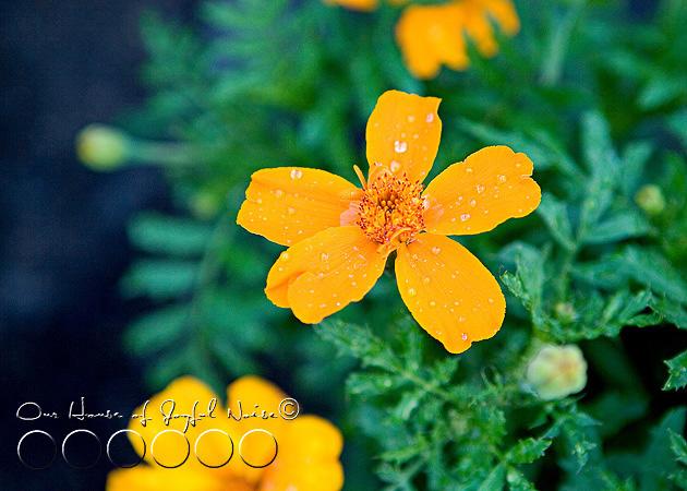 early-flower-vegetable-garden-photos-13