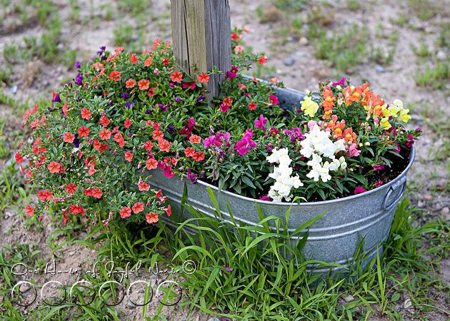 early-flower-vegetable-garden-photos-15