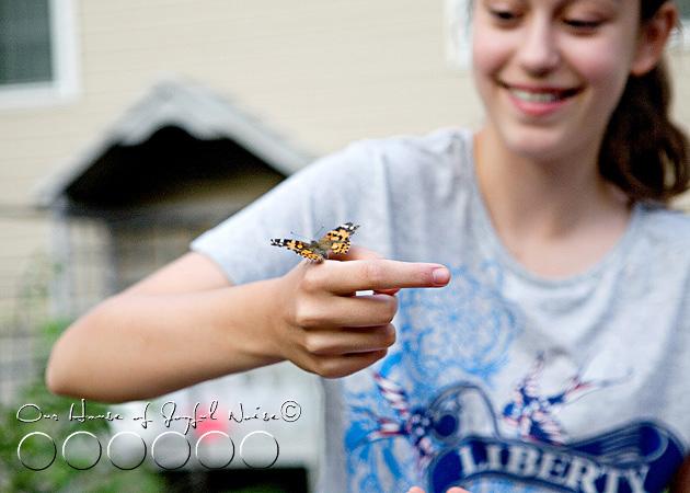 metamorphosis-butterflies-study-homeschoolig-18