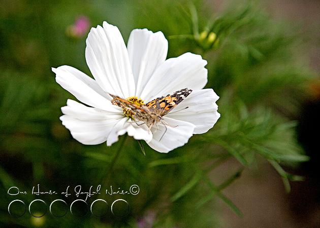 metamorphosis-butterflies-study-homeschoolig-20