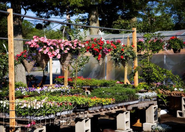 001_flower-nursery