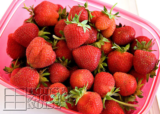 lessons-learned-growing-strawberries-4