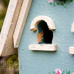003_birdhouse-woodpecker-damage-150x150