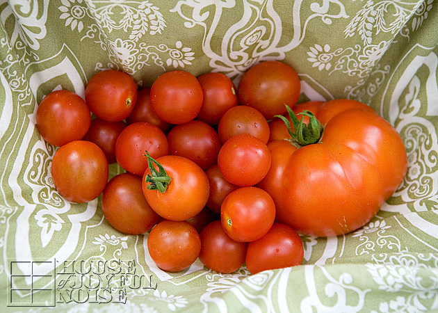 001_garden-tomatoes-in-skirt