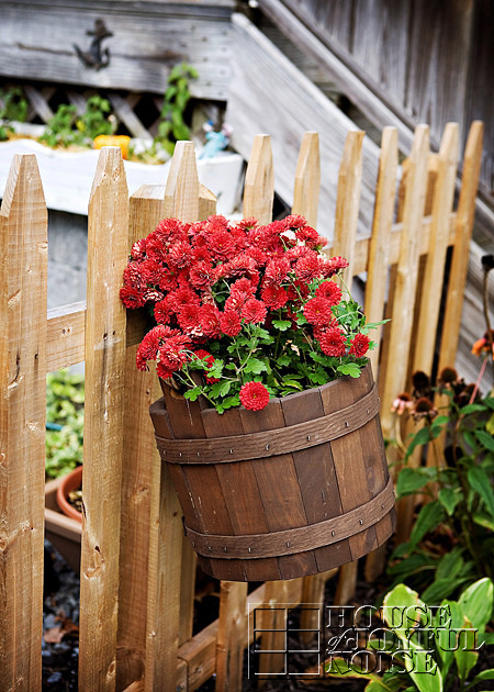 burgandy mums in wooden bucket hanging on picket fence