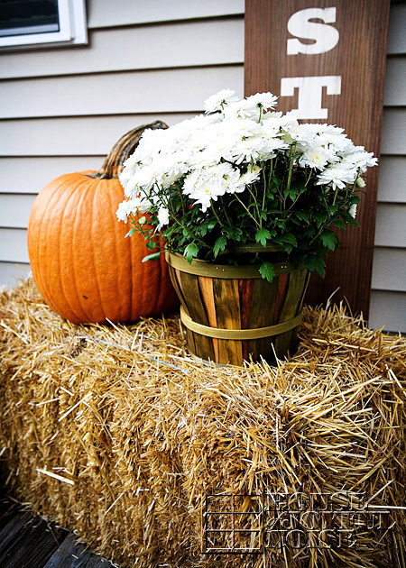white mums in bushel basket with orange pumpkin